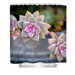 Shower Curtain featuring the photograph 3 Succulents by John Rodrigues
