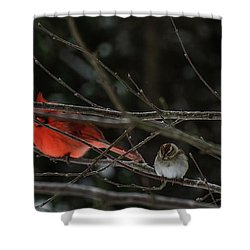 3cardinals And A Sparrow Shower Curtain