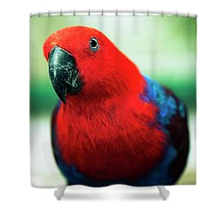 Shower Curtain featuring the photograph Crimson Rosella by Rob D