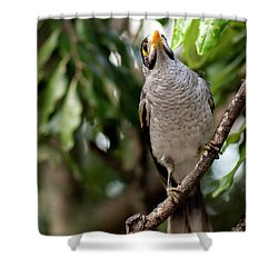 Shower Curtain featuring the photograph Noisy Miner Bird By Itself by Rob D