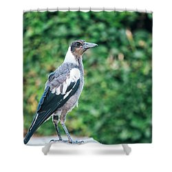 Shower Curtain featuring the photograph Australian Magpie Outdoors by Rob D