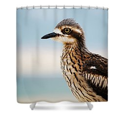 Shower Curtain featuring the photograph Bush Stone-curlew Resting On The Beach. by Rob D