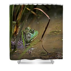 A Frog Waits Shower Curtain