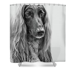 A Kind And Regal Spirit Shower Curtain