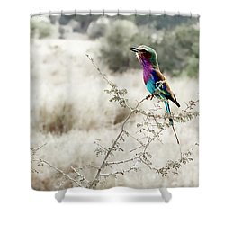 A Lilac Breasted Roller Sings, Desaturated Shower Curtain