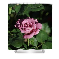 A New Rose Shower Curtain
