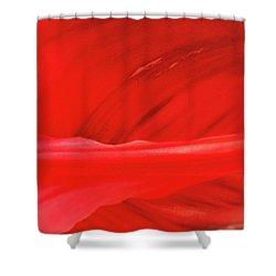 A Single Tulip Petal Shower Curtain