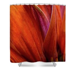 Shower Curtain featuring the photograph A Slice From The Cone by Dale Kincaid
