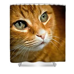 Adorable Ginger Tabby Cat Posing Shower Curtain