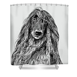 Afghan Hound 3 Shower Curtain