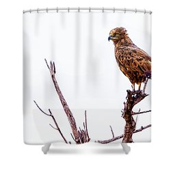 Shower Curtain featuring the photograph African Crowned Eagle by Kay Brewer