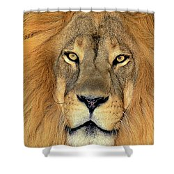 Shower Curtain featuring the photograph African Lion Portrait Wildlife Rescue by Dave Welling