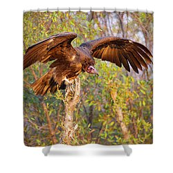 Shower Curtain featuring the photograph African Vulture by John Rodrigues