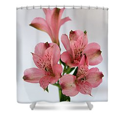Alstroemeria Up Close Shower Curtain