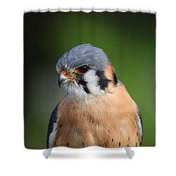 American Kestrel 5151801 Shower Curtain