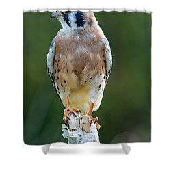 American Kestrel 9251502 Shower Curtain