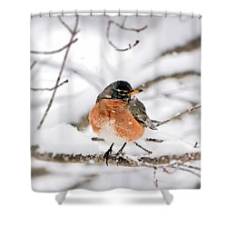 American Robin In The Snow Shower Curtain