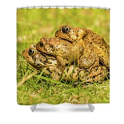 American Toad Western Brooke Pond, Grose M Shower Curtain