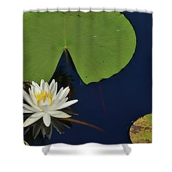 American Water Lily Shower Curtain