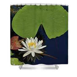 American Water Lily-square Shower Curtain