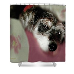 And This Is Sparky6 Shower Curtain