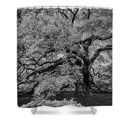 Shower Curtain featuring the photograph Angel Oak Tree Black And White by Rick Berk