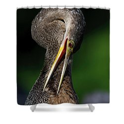 Anhinga Combing Feathers Shower Curtain