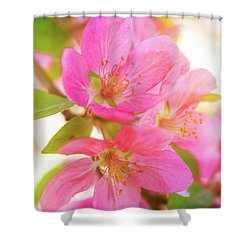 Apple Blossoms Warm Glow Shower Curtain
