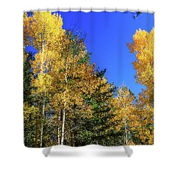 Arizona Aspens In Fall 1 Shower Curtain