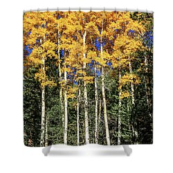 Arizona Aspens In Fall 3 Shower Curtain