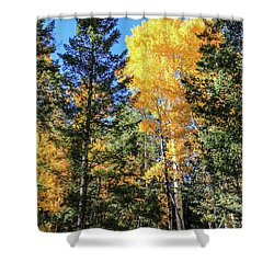 Arizona Aspens In Fall 5 Shower Curtain