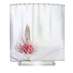 The Heart Of A Magnolia Shower Curtain