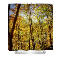 Shower Curtain featuring the photograph As The Leaves Turn  by Edmund Nagele