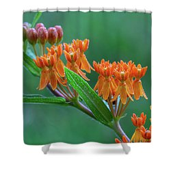 Shower Curtain featuring the photograph Asclepias Tuberosa by Dale Kincaid