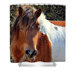 Shower Curtain featuring the photograph Assateague Pinto Mare Ms Macky by Bill Swartwout Fine Art Photography