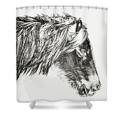 Shower Curtain featuring the photograph Assateague Pony Sarah's Sweet Tea Sketch by Bill Swartwout Fine Art Photography