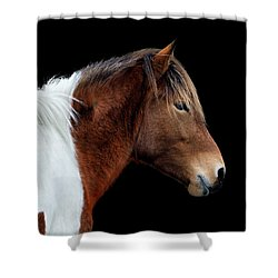 Shower Curtain featuring the photograph Assateague Pony Susi Sole Portrait On Black by Bill Swartwout Fine Art Photography