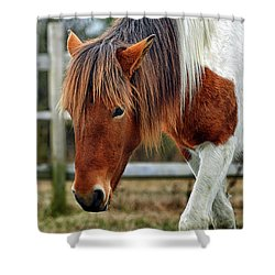 Shower Curtain featuring the photograph Assateague Wild Horse Susi Sole N2bhs-m by Bill Swartwout Fine Art Photography