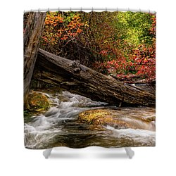 Shower Curtain featuring the photograph Autumn Dogwoods by TL Mair