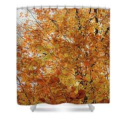 Autumn Explosion 1 Shower Curtain