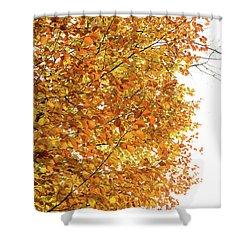 Autumn Explosion 2 Shower Curtain