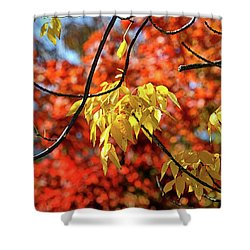 Shower Curtain featuring the photograph Autumn Foliage In Bar Harbor, Maine by Bill Swartwout Fine Art Photography