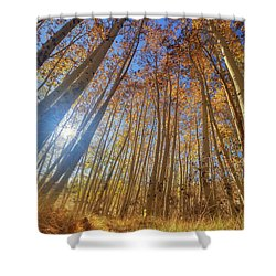 Autumn Giants Shower Curtain