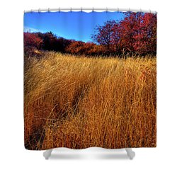 Shower Curtain featuring the photograph Autumn Path by David Patterson