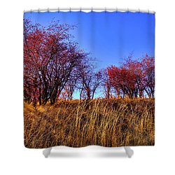 Shower Curtain featuring the photograph Autumn Sun by David Patterson