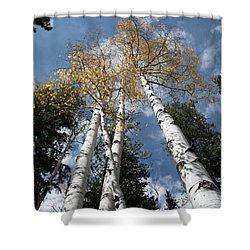 Autumnal Aspen Shower Curtain