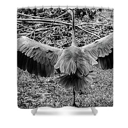 Time To Spread Your Wings Shower Curtain