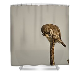 B41 Shower Curtain