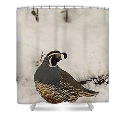 B45 Shower Curtain