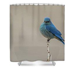 B52 Shower Curtain